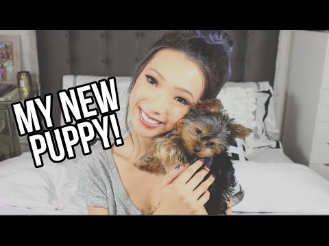 I Got a New Puppy!
