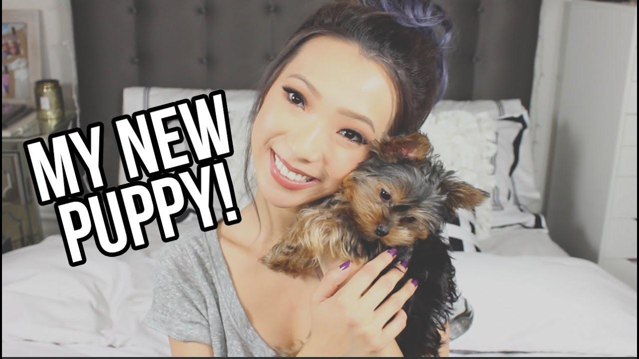 I Got A New Puppy! Youtube