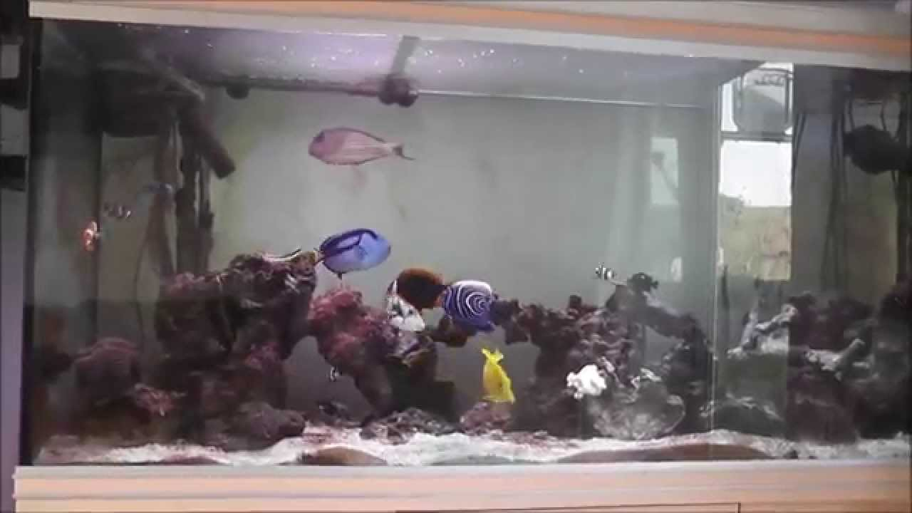 Fish aquarium tanks for sale - Marine Fish Tank Sale Ebay