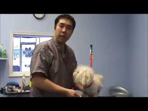 How to Groom a Matted Dog That Bites