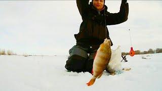 СЕКРЕТНАЯ МОРМЫШКА КОСИТ ОКУНЯ! Зимняя рыбалка. УДАЧНОЕ ОТКРЫТИЕ СЕЗОНА. Уже не первый лёд.