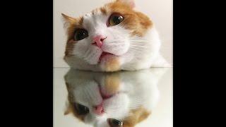 Котенок нападает на зеркало   Кто же кого ! =