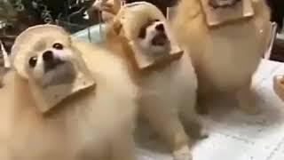 Собаки и хлеб