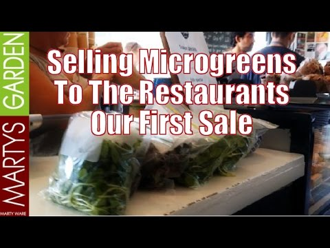 Selling Microgreens to the Restaurants Our First Sale