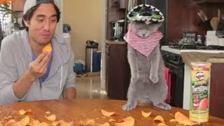 Top 100 Zach King Magic Vines Compilation - Best Magic Tricks Ever