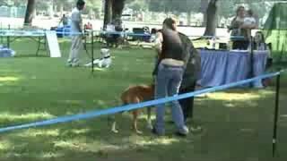 Ukc Dog Show 2a