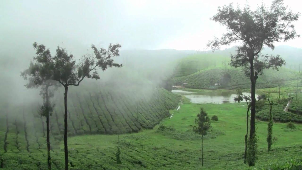 Fog Covering The Tea Estates Of Valparai A Perfect