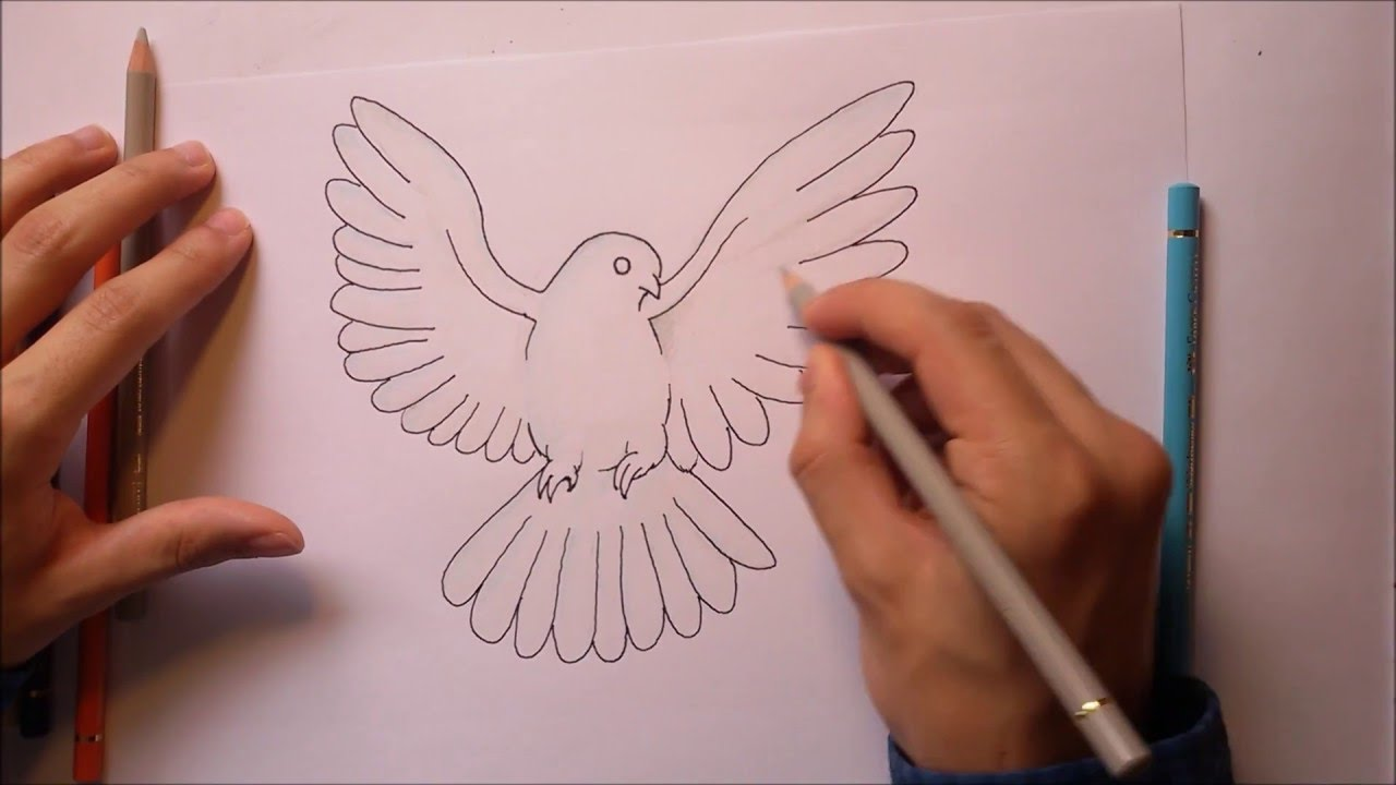how to draw a dove white pigeon youtube