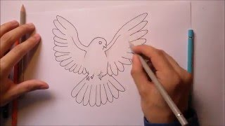 How to draw a dove / white pigeon