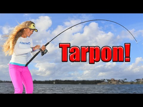 BIG fish, TINY lure! Florida Inshore Fishing for HUGE Tarpon!
