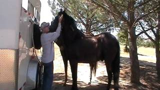 Horse Fly Spray Application - My Way Not the only way- Rick Gore Horsemanship