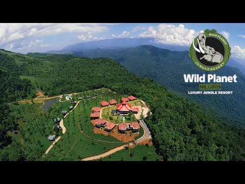 Wild Planet Luxury Jungle Resort, Devala Nilgiris - Review by Tech Travel Eat