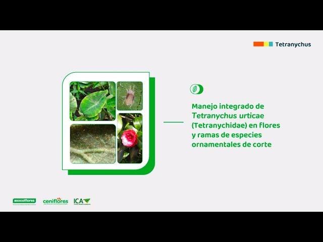 Biología y manejo integrado de Tetranychus urticae en especies ornamentales de corte
