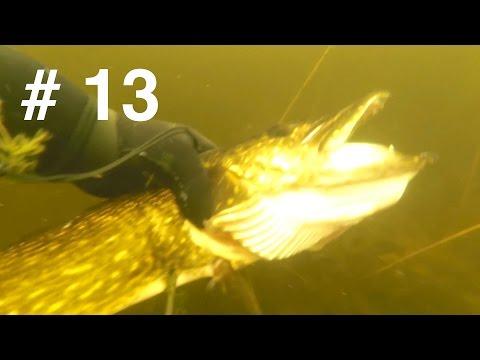 Подводная охота, новое озеро   Охота на щуку и САПОГ )
