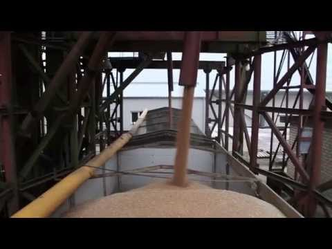 Transporting grain to the harbor