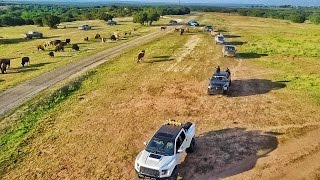Herding Buffalo with 100 Trucks!!!