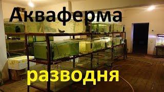 Аквариумная разводня в Латвии