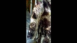видео Как почистить шубу из бобра в домашних условиях