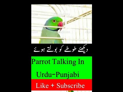 PARROT talking in urdu hindi language funny video animals