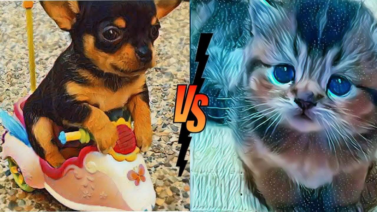 Baby cats Vs Baby dogs //cute and funny dogs and cats videos compilation/aww animals