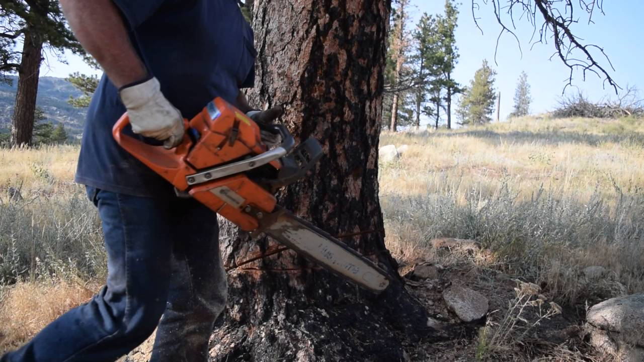 Tree Felling Like a Beast with a Chainsaw - YouTube
