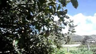 Bayushig 1. Huerta  de manzanas