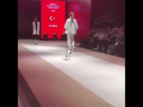 Cat in a Fashion Shaw- Original cat walk