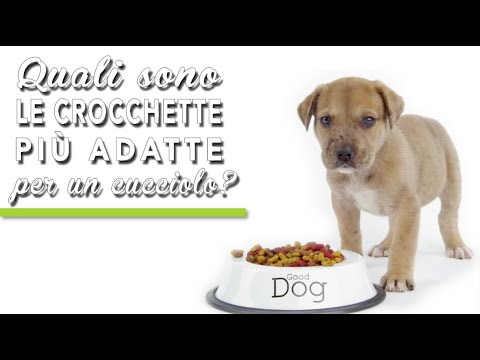 Pellettatrice per mangimi per cani crocchette from YouTube · Duration:  44 seconds