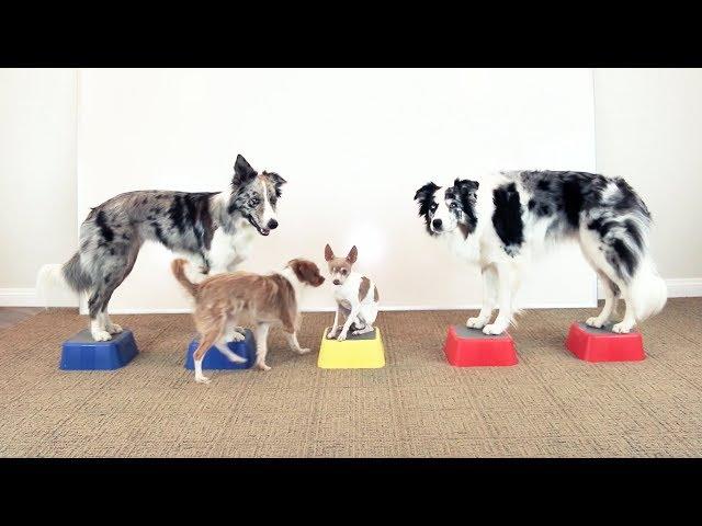 Epic Multi Dog Trick -  Dog Training