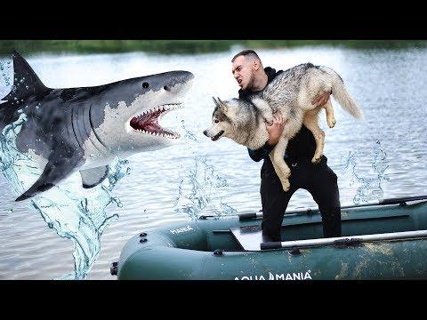ВЫБРОСИЛ ХАСКИ С ЛОДКИ / учим собаку плавать
