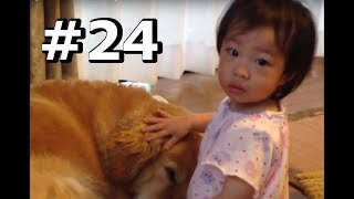 Hi,there! how are you? Do you know my family? So cute! Golden retri...