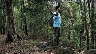 Bushcraf indonesia   #Bushcraftindonesia #bushcraftsolo         Bushcraft solo hiking jungle cooking