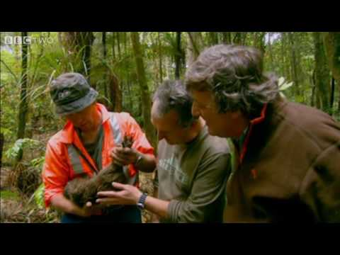 Last Chance To See – The Kiwi – BBC Two
