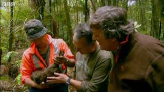 Last Chance To See - The Kiwi - BBC Two