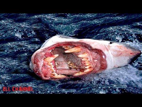 10 უჩვეულო ზვიგენის სახეობა (ვიდეო)