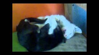 Macska erotika