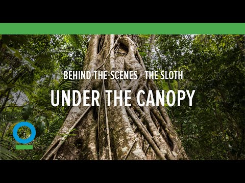 Behind-the-Scenes: Filming the Sloth   Conservation International (CI)