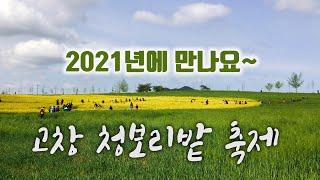 2020년 고창 청보리 축제 취소 확정! | 집콕 리마…