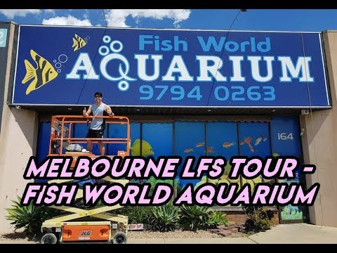 Melbourne LFS Tour - Fish World Aquarium