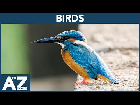 A To Z Of Birds | ABC Of Birds Starting From A To Z