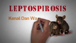 Infeksi Bakteri Leptospirosis, Biasa Dikenal dengan Kencing Tikus.