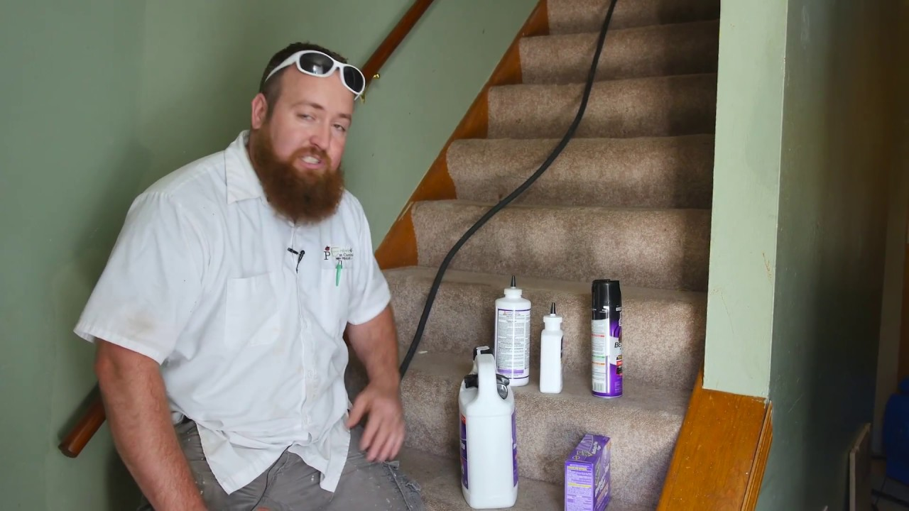 Why A Bed Bug Spray Won T Work To Get Rid Of Bed Bugs Youtube