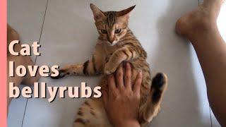 CAT loves ♡ BELLYRUBS Part2