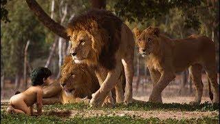 Львы саванны спасли девочу топ интересных фактов