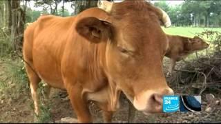 Sécheresse : éleveurs en danger