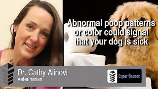 Abnormal poop patterns or color could mean a sick dog