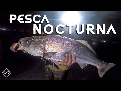 Pesca NOCTURNA de