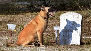 Cadaver dogs find unmarked graves in historic Wilmington, N.C. church cemetery