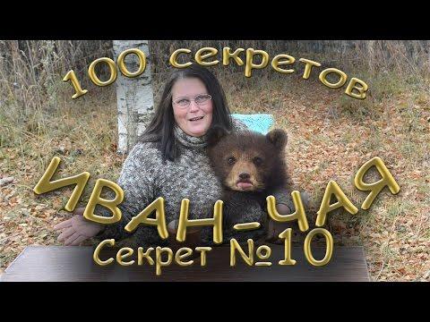 Иван чай узколистый кипрей лечебные свойства, рецепты