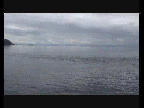 The Magic Waitahanui River